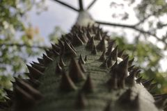 木棉树 图库摄影