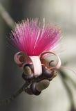 木棉绣花丝绒花表单丝绸speciosa结构树 库存图片