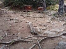 木森林 免版税图库摄影