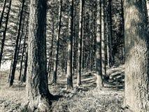 木森林 免版税库存照片