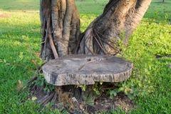 木椅子在古老树下 库存照片
