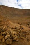 木植物灌木timanfaya火山岩石头兰萨罗特岛 图库摄影