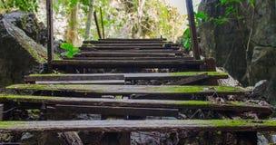 木楼梯在密林 免版税图库摄影