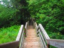 木楼梯在森林里 免版税库存照片