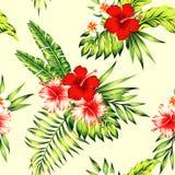 木槿和棕榈叶热带无缝的背景 免版税库存图片