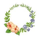 木槿和蓝色Butterfy豌豆花花圈 免版税图库摄影