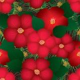 木槿红顶无缝的样式 免版税图库摄影