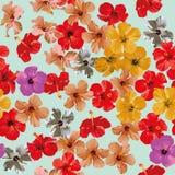 木槿花纹花样无缝的背景 库存图片