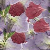 木槿,喇叭花 被按的干燥flowe无缝的样式纹理  免版税图库摄影
