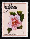 木槿,木槿serie,大约1978年 库存图片