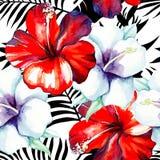 木槿水彩样式,黑白热带叶子 免版税库存图片