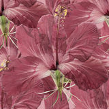 木槿 被按的干燥花无缝的样式纹理  库存图片