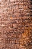 木模式纹理 免版税图库摄影