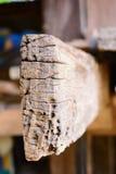 木模式 免版税库存照片