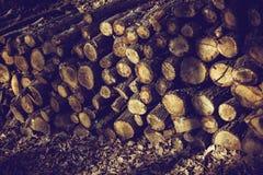 木注册显示的一个森林 库存照片