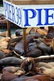 木激昂的狮子平台的海运 免版税库存照片