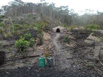 木炭的非法生产在末多Atlantica森林-巴西里 免版税库存照片