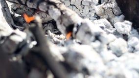 木炭 灼烧的木炭 特写镜头 木炭烬为烤肉格栅做准备 影视素材