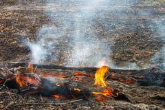 木燃烧和森林火灾。 免版税图库摄影