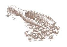 木瓢用黑胡椒 皇族释放例证