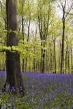 木的会开蓝色钟形花的草 免版税库存图片