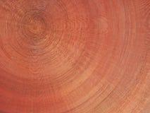 木的圆屋顶 库存照片