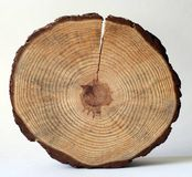 木的圈子 免版税库存照片