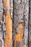 木的墙壁 免版税库存照片
