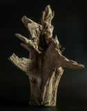 木的对象 库存图片