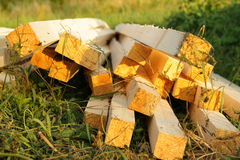 木的射线 免版税库存照片