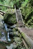 木的梯子 免版税库存照片