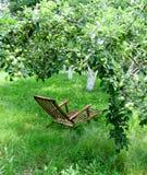 木的椅子 椅子在一个绿色夏天庭院里 绿色苹果 库存图片