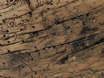 木的毛面 免版税库存照片