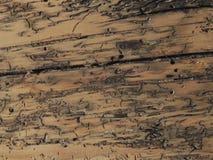 木的毛面 免版税图库摄影