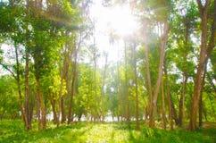 木的矮子 库存图片