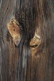 木的背景 免版税库存图片