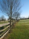 木的范围 免版税图库摄影