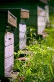 木的蜂箱 库存图片
