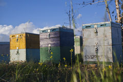 木的蜂箱 免版税库存照片
