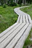 木的路 免版税图库摄影