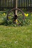 木的轮胎 免版税库存图片