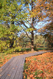 木的运输路线 免版税库存图片