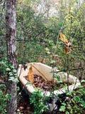 木盆在森林 免版税图库摄影