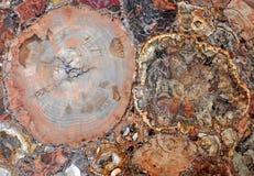木石化块集岩 免版税图库摄影