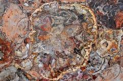 木石化块集岩 库存照片