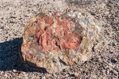 木石化,化石森林国家公园, AZ,美国 库存图片