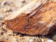 木石化,化石森林片断在Damaraland,纳米比亚,非洲 库存图片