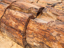 木石化,化石森林片断在Damaraland,纳米比亚,非洲 图库摄影