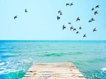 木码头有对鸽子蓝色海和群的看法  免版税库存照片