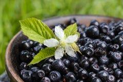 木碗新鲜的蓝莓 库存图片